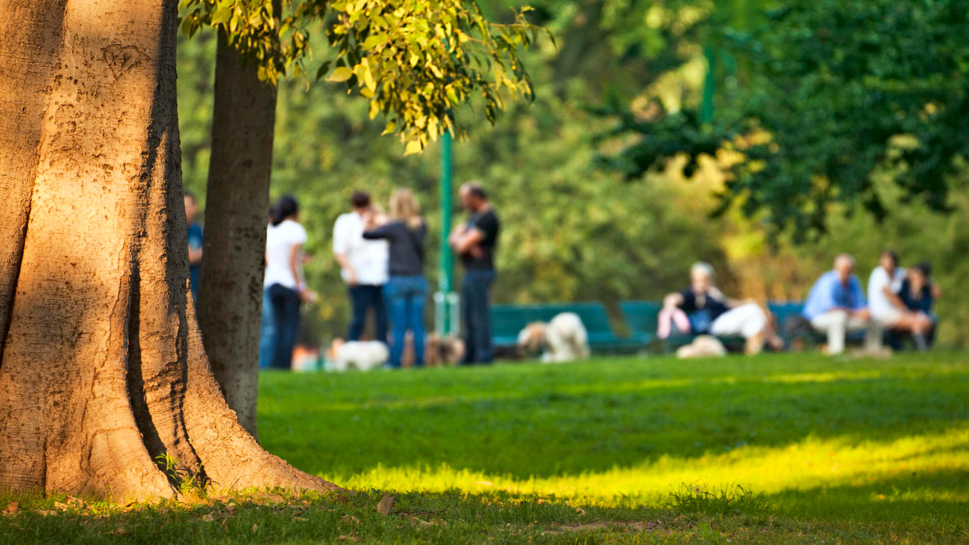 a tree in the park with people standing in the background